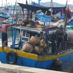 Crossing new and old borders: Fishers expanding beyond the South China Sea