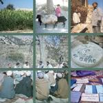 Mid-term Evaluation Report of the National Solidarity Programme (NSP), Afghanistan